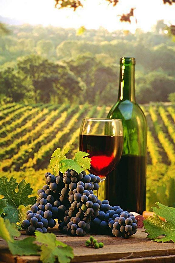 vínna cesta